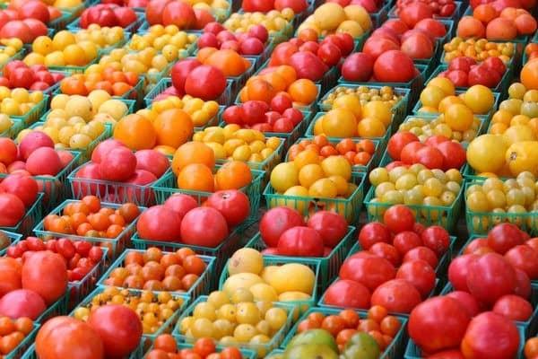 Как выбрать лучшие сорта помидоров
