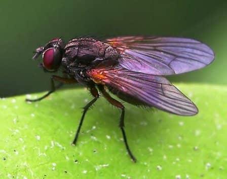 Защита дома от насекомых и грызунов