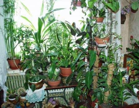 Домашние растения - полезная информация