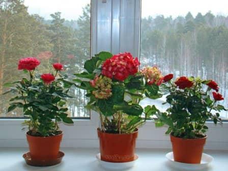 Ориентируем домашние растения по сторонам света