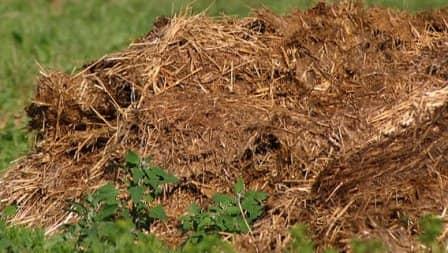 Органические удобрения и их использование