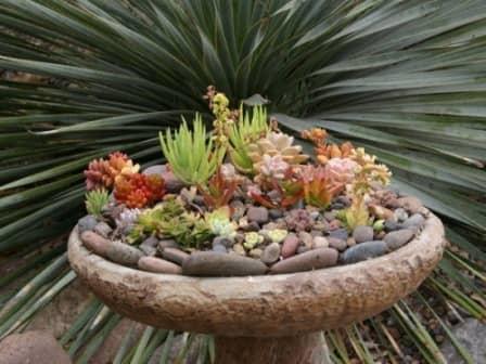 Красивые садовые композиции из суккулентов - фото