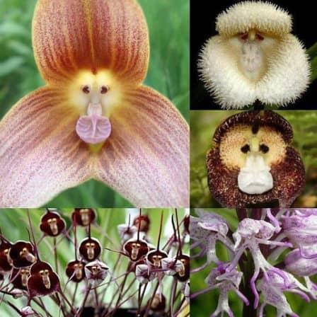 Если по другому взглянуть на цветы