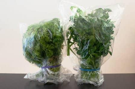 Как дольше сохранить зелень свежей в холодильнике?