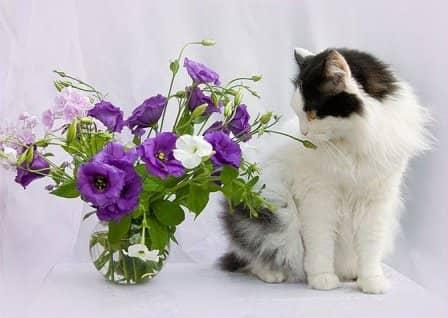 Как сохранить срезанные цветы дольше?