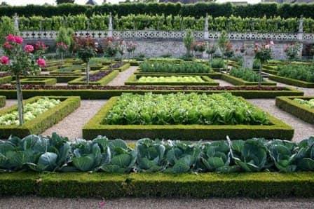 Декоративный огород - его устройство + фото