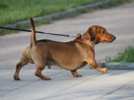 Как выгуливать собаку?