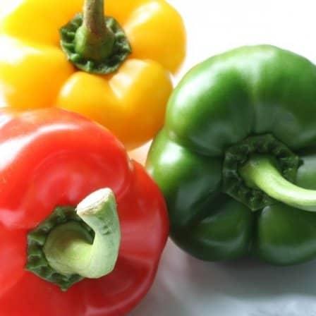 Выбор сорта и сроки посева перца