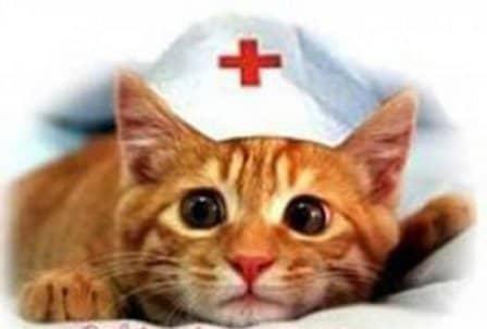 Лечение с помощью кошек (кошкотерапия)