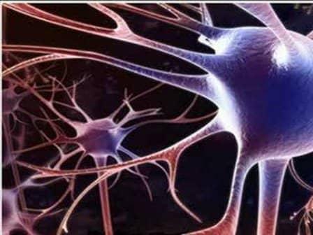 Нервная система и способы ее укрепления