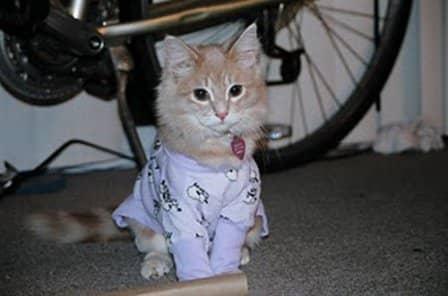 Собаки и кошки в пижамах - фотоподборка