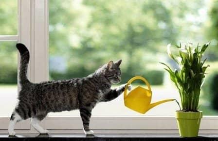Поливка и опрыскивание комнатных растений