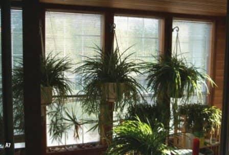 Регулирование освещения и тепла для комнатных растений