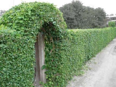 Как защитить сад от ветра?