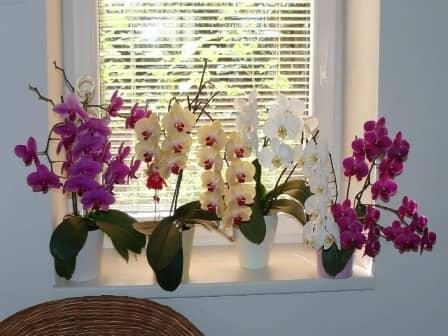 Как ухаживать за орхидеей фаленопсис круглый год?