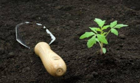 Оздоровление почвы на участке