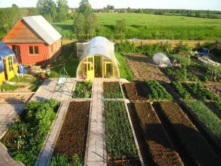 Полезные советы огородникам