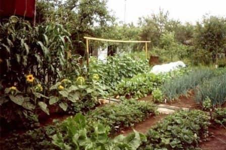 Севооборот культур на огороде