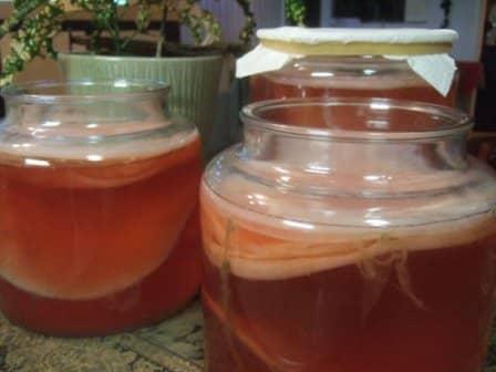 Чайный гриб: приготовление и уход