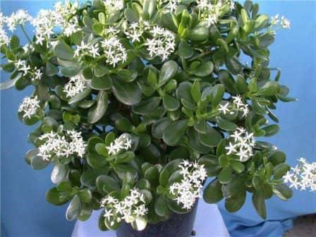 Самые неприхотливые комнатные цветы и растения - топ 10