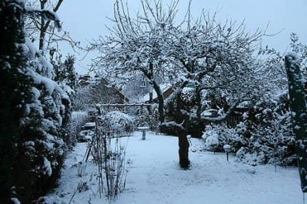 Работы в саду и огороде в декабре
