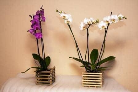 Фитолампы для орхидей: пустяк или необходимость?