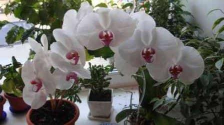 Как ухаживать за орхидеями в домашних условиях - советы для начинающих