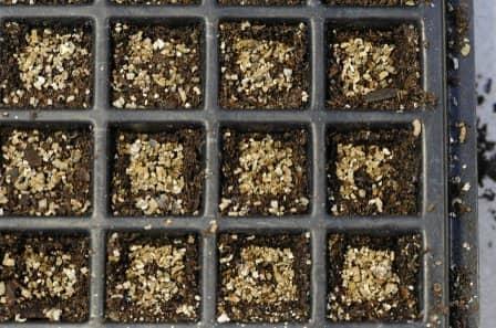 Проращивание семян перед посадкой