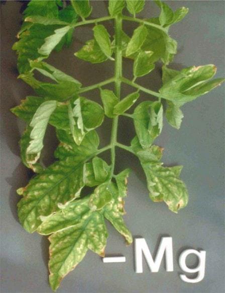 Как недостаток элементов питания проявляется на растениях?