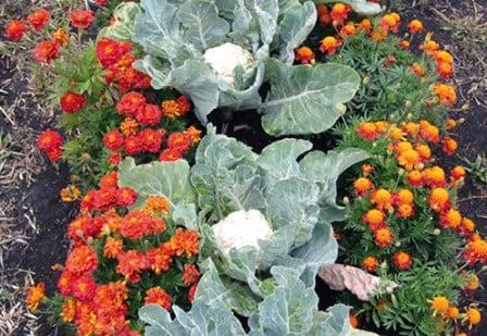 Применение растительных отваров и настоев для уничтожения и отпугивания вредителей