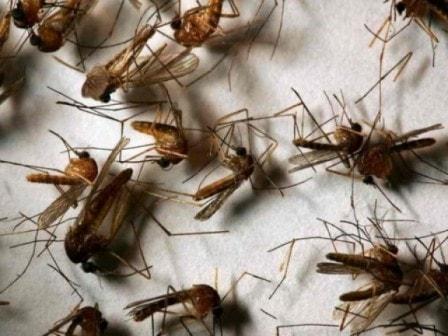 Избавляемся от комаров в доме при помощи запахов