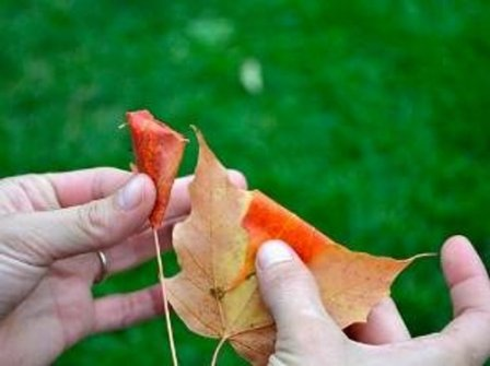 Поделки из листьев: букет роз