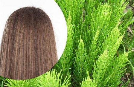 Как использовать хвощ для волос?