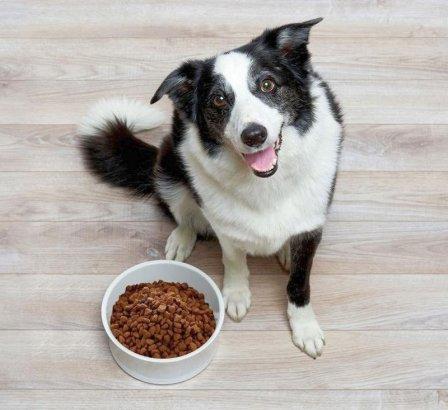 Как выбрать подходящий корм для своего домашнего животного