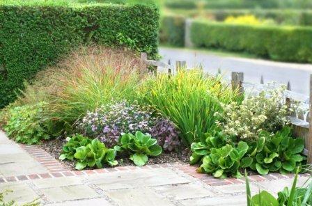 Неприхотливые многолетники в саду