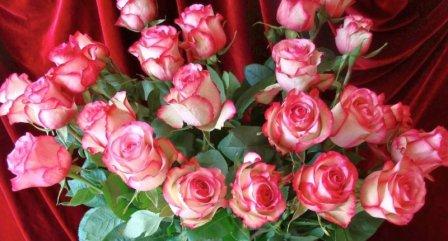 Выбираем розы для второй половинки